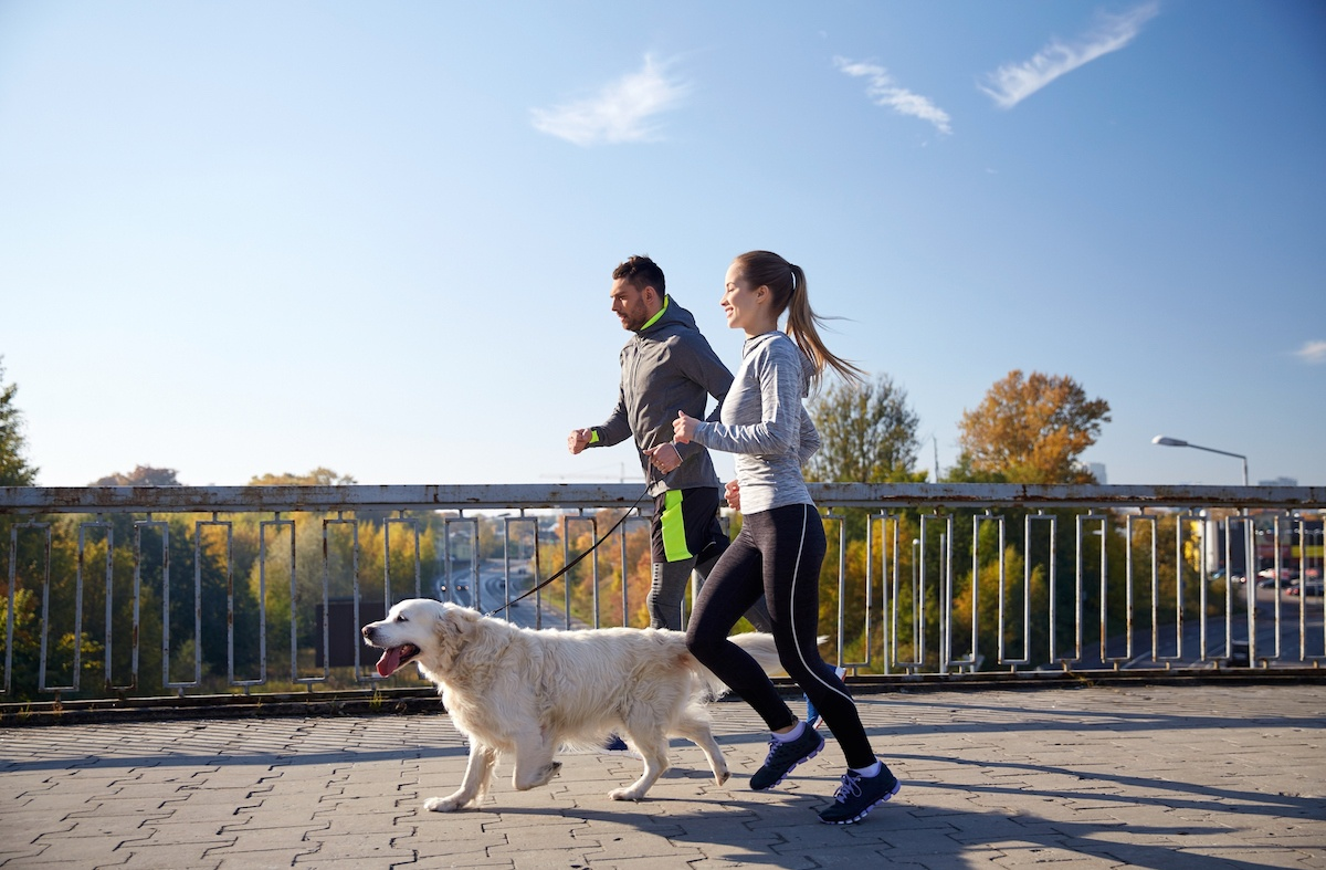 Best workouts to try with your dog | AFPA Fitness